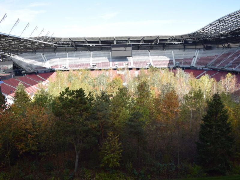 Slika 2: Čudoviti gozd sredi stadiona kot opozorilo, ©Luka Lampichler